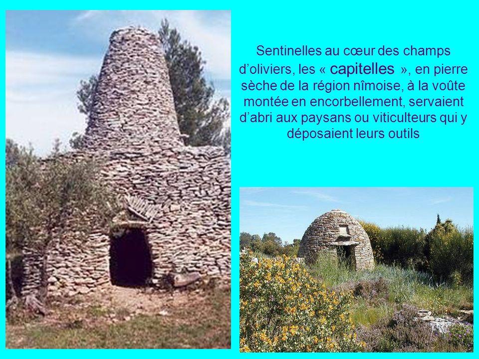 Cultures en terrasses soutenues par des murets de pierres sèches Les « faïsses ou « bancels » du pays cévenol