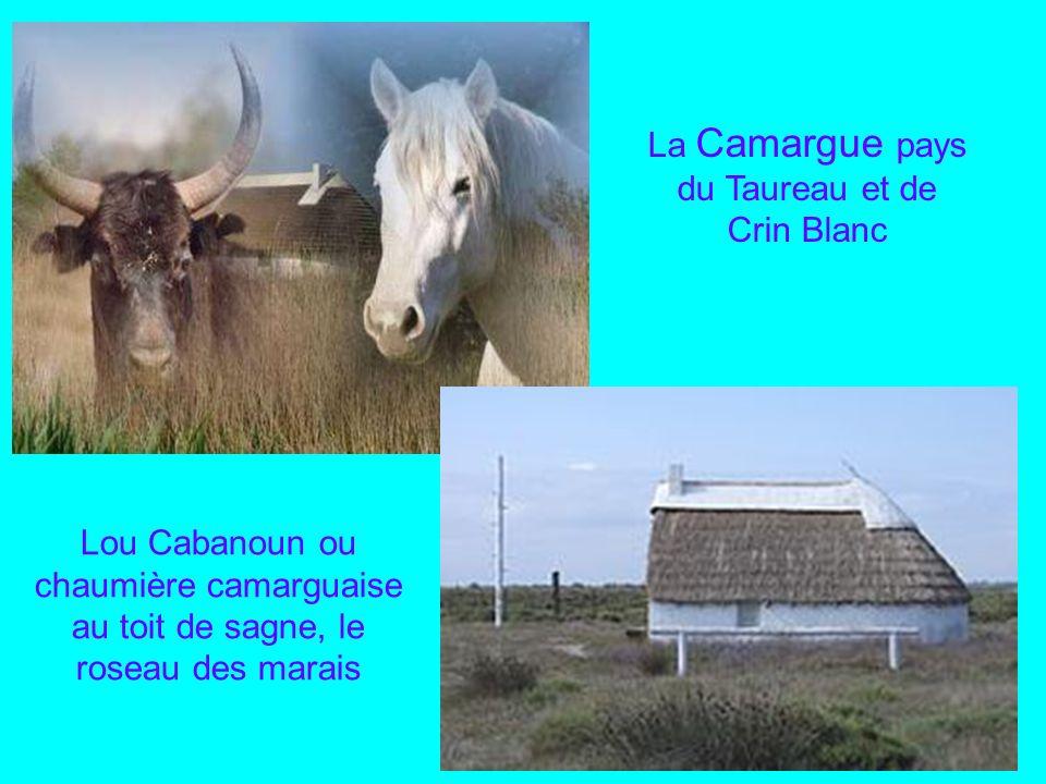 Port Camargue, avec ses 4 600 places cest un des tout premiers port de plaisance de Méditerranée, situé sur la commune du Grau du Roi limitrophe avec