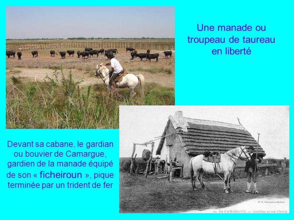 La Camargue pays du Taureau et de Crin Blanc Lou Cabanoun ou chaumière camarguaise au toit de sagne, le roseau des marais