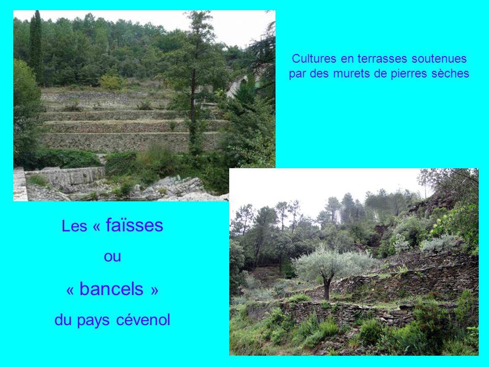Passage par limpressionnant Viaduc de Mescladou avec ses 11 arches La promenade se poursuit par le tunnel de Salendrinque et les viaducs des Amous et