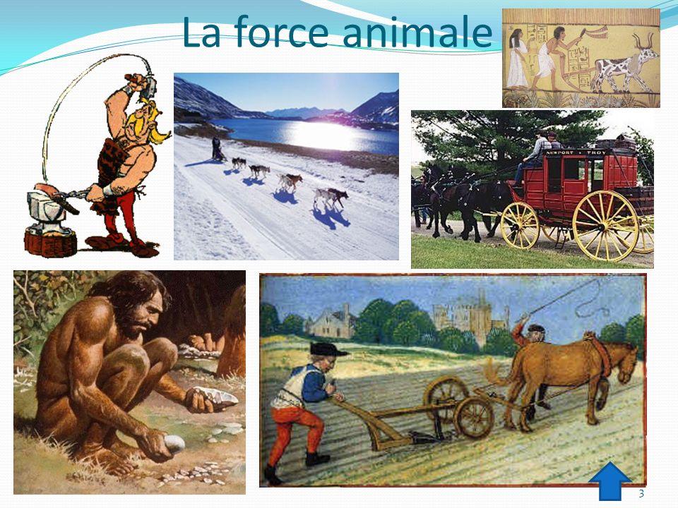 La force animale 3