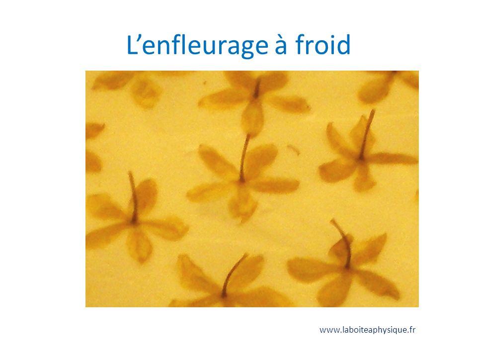 Lenfleurage à froid www.laboiteaphysique.fr