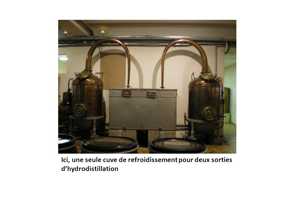 Ici, une seule cuve de refroidissement pour deux sorties dhydrodistillation