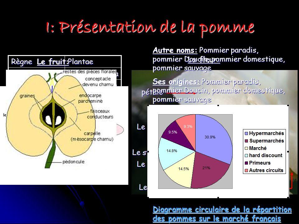 I: Présentation de la pomme RègnePlantae Sous-règneTracheobionta DivisionMagnoliophyla ClasseMagniolispsida Sous-classeRosidae OrdreRosales FamilleRos