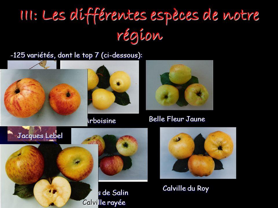 III: Les différentes espèces de notre région -125 variétés, dont le top 7 (ci-dessous): Appi étoilée en grappe Arboisine Arboisine Belle Filles de Sal