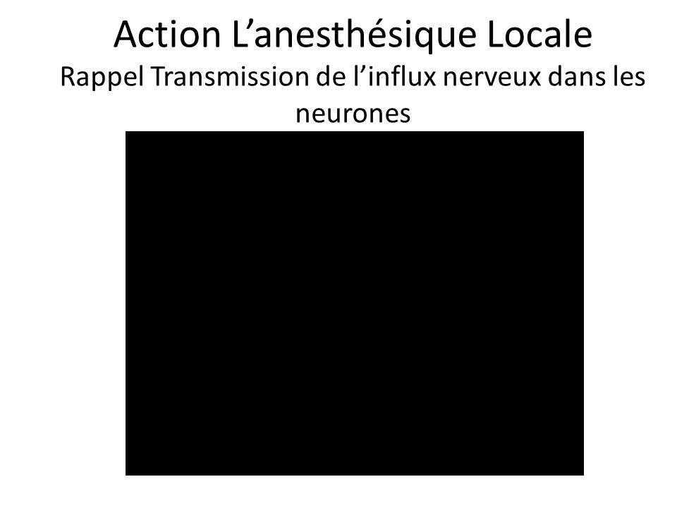 Action Lanesthésique Locale Rappel Transmission de linflux nerveux dans les neurones