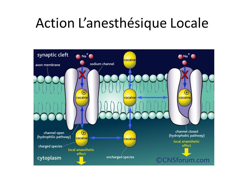 Action Lanesthésique Locale