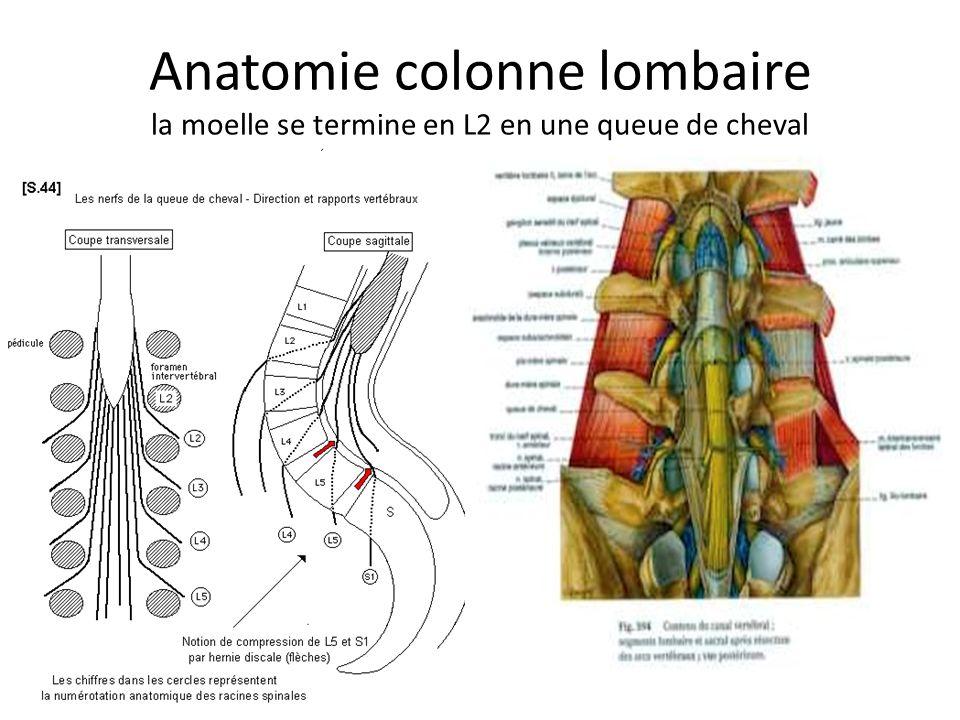 Anatomie colonne lombaire la moelle se termine en L2 en une queue de cheval