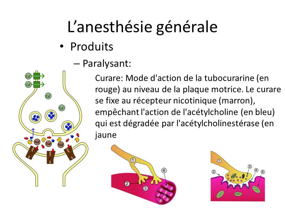 Lanesthésie générale Produits – Paralysant: Curare: Mode d'action de la tubocurarine (en rouge) au niveau de la plaque motrice. Le curare se fixe au r