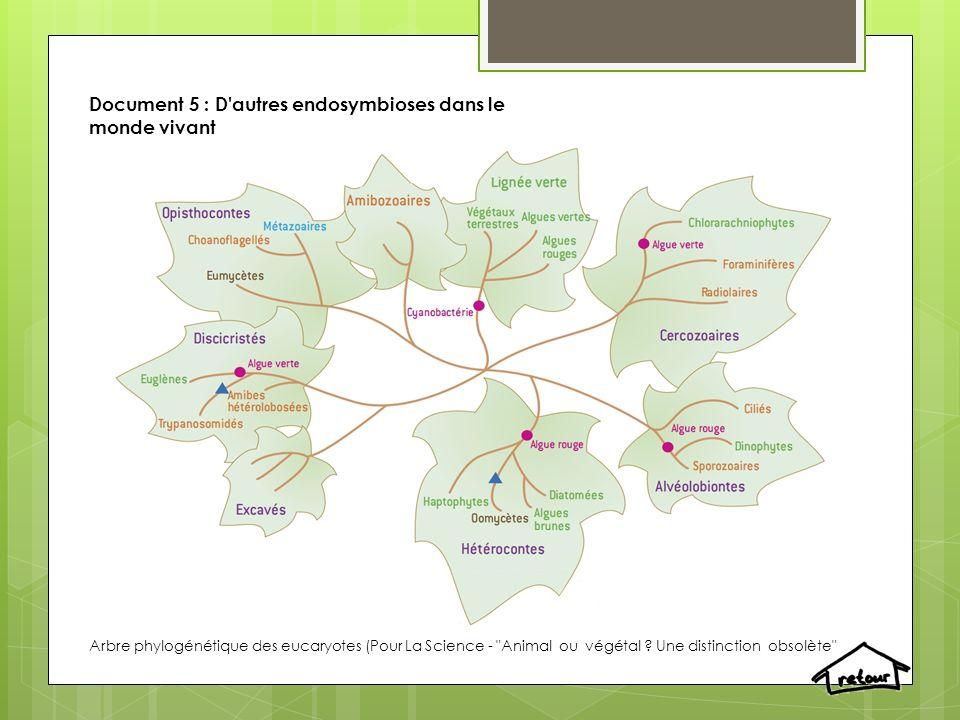 Document 5 : D'autres endosymbioses dans le monde vivant Arbre phylogénétique des eucaryotes (Pour La Science -