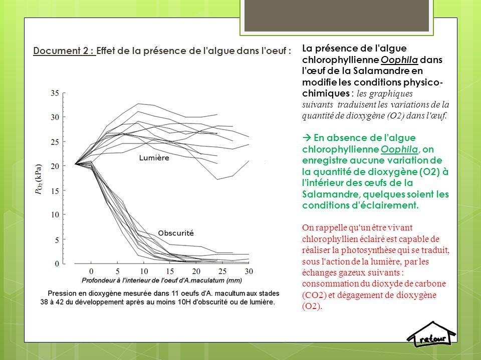 Document 2 : Effet de la présence de l algue dans l oeuf : La présence de l algue chlorophyllienne Oophila dans l œuf de la Salamandre en modifie les conditions physico- chimiques : les graphiques suivants traduisent les variations de la quantité de dioxygène (O2) dans l œuf.
