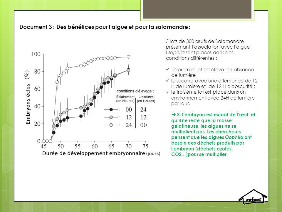 Document 3 : Des bénéfices pour l'algue et pour la salamandre : 3 lots de 300 œufs de Salamandre présentant l'association avec l'algue Oophila sont pl