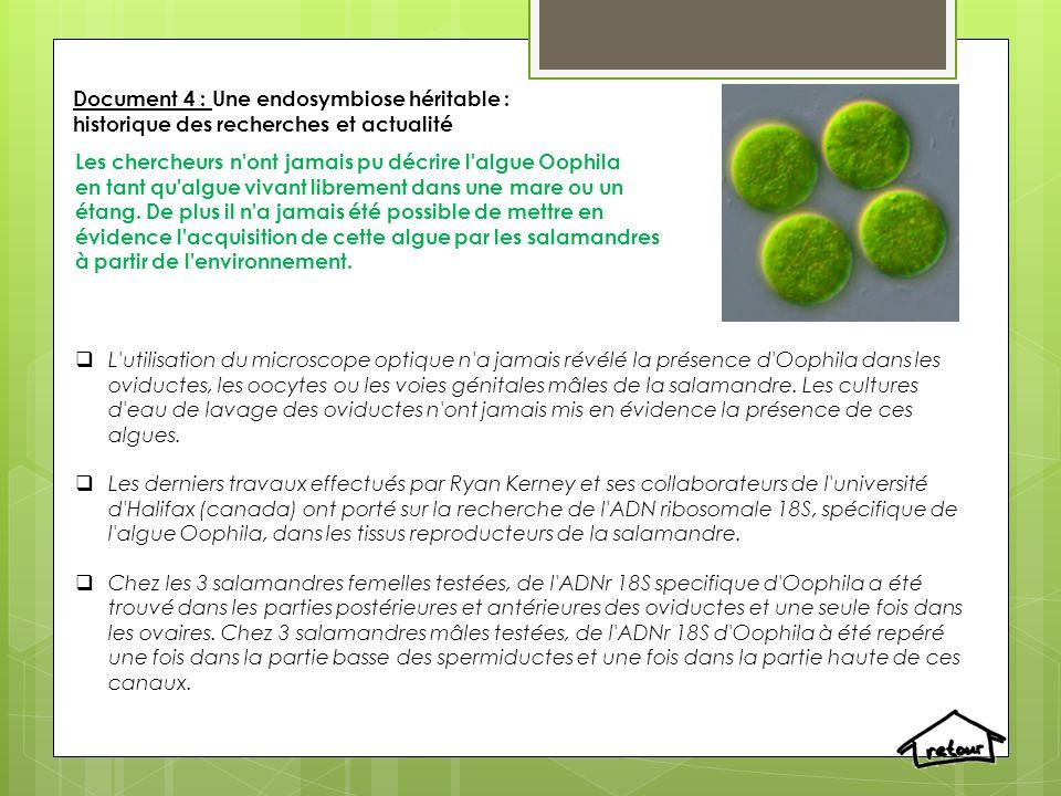 Document 4 : Une endosymbiose héritable : historique des recherches et actualité Les chercheurs n ont jamais pu décrire l algue Oophila en tant qu algue vivant librement dans une mare ou un étang.
