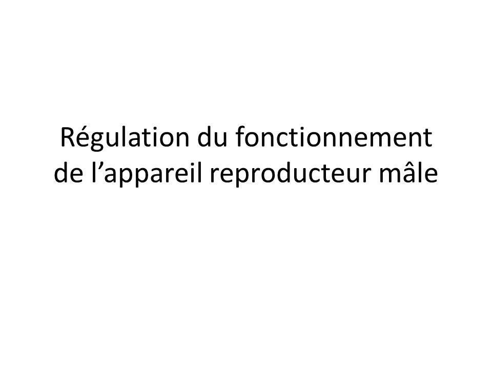 Régulation du fonctionnement de lappareil reproducteur mâle