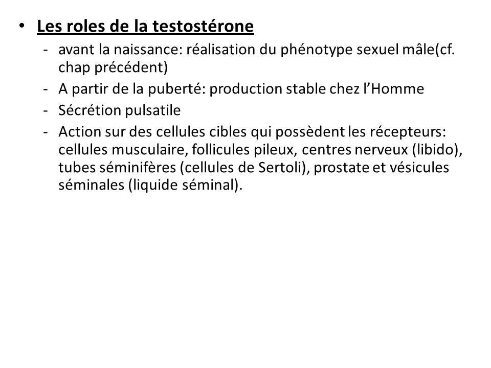 Les roles de la testostérone -avant la naissance: réalisation du phénotype sexuel mâle(cf. chap précédent) -A partir de la puberté: production stable