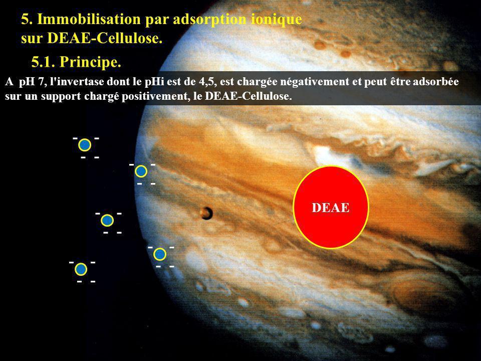 5. Immobilisation par adsorption ionique sur DEAE-Cellulose. 5.1. Principe. A pH 7, l'invertase dont le pHi est de 4,5, est chargée négativement et pe