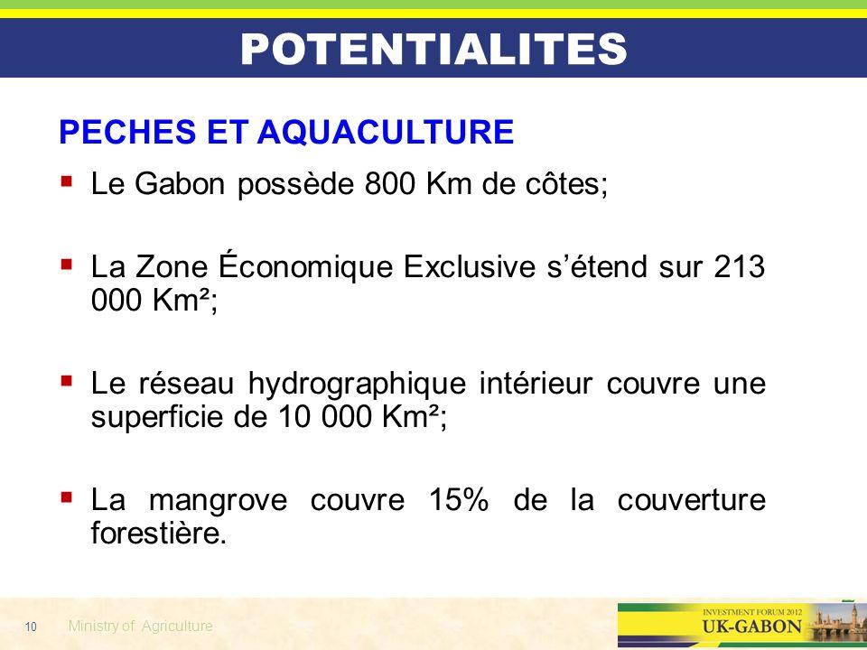 10 Ministry of Agriculture POTENTIALITES PECHES ET AQUACULTURE Le Gabon possède 800 Km de côtes; La Zone Économique Exclusive sétend sur 213 000 Km²;