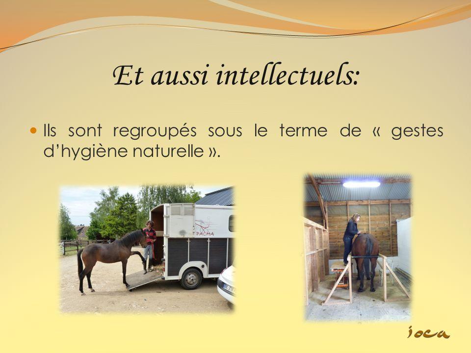 Nous proposons également un service à domicile dans les cas où les propriétaires ne peuvent pas amener leurs chevaux (embarquement et attrapage difficile…) au centre.