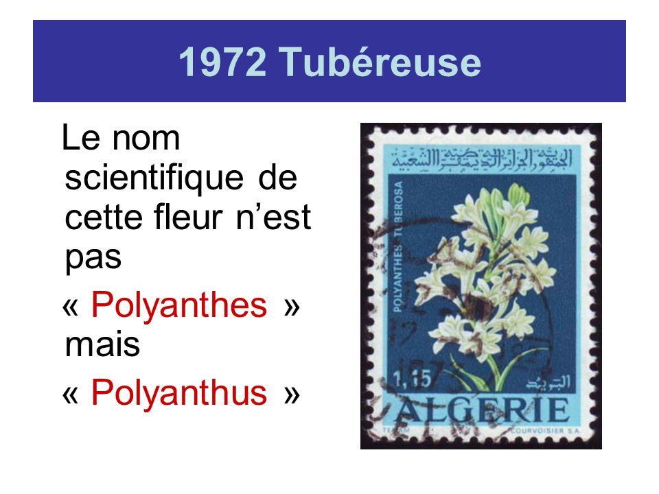 1972 Tubéreuse Le nom scientifique de cette fleur nest pas « Polyanthes » mais « Polyanthus »