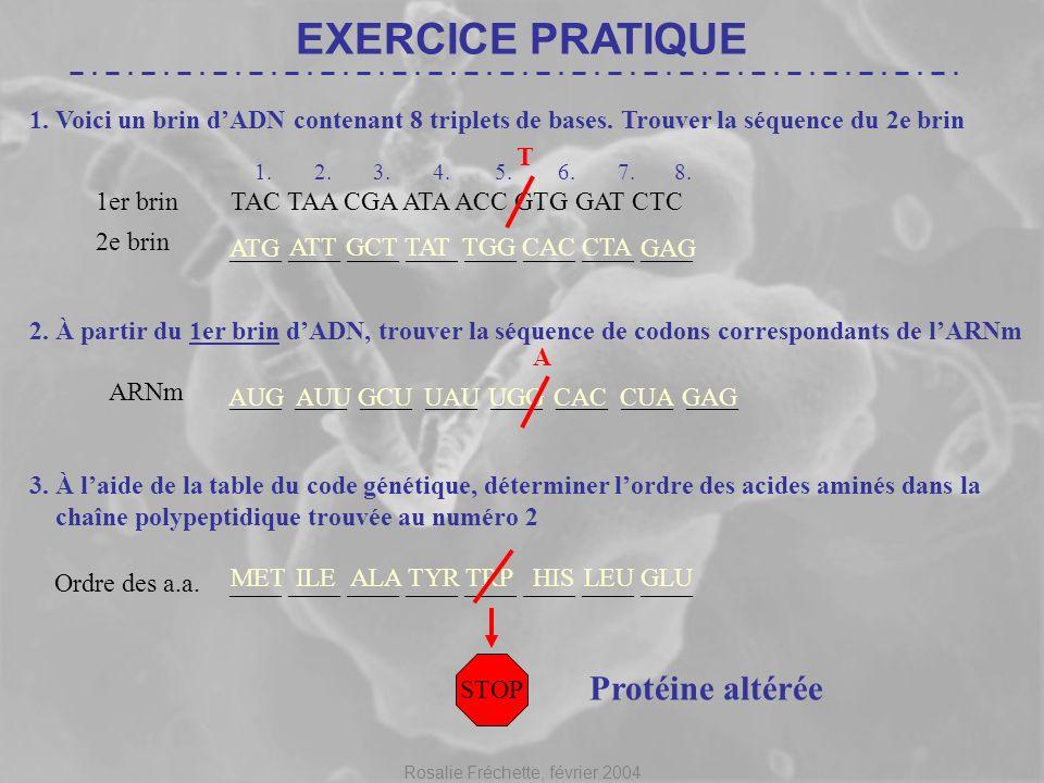 Rosalie Fréchette, février 2004 ____ ____ ____ ____ AUG AUUGCUUAUUGGCAC CUA GAG EXERCICE PRATIQUE TAC TAA CGA ATA ACC GTG GAT CTC 1. Voici un brin dAD