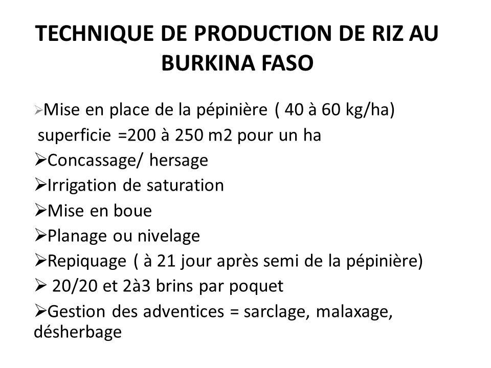 TECHNIQUE DE PRODUCTION DE RIZ AU BURKINA FASO Mise en place de la pépinière ( 40 à 60 kg/ha) superficie =200 à 250 m2 pour un ha Concassage/ hersage