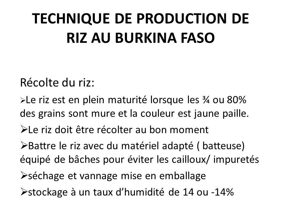 TECHNIQUE DE PRODUCTION DE RIZ AU BURKINA FASO Récolte du riz: Le riz est en plein maturité lorsque les ¾ ou 80% des grains sont mure et la couleur es