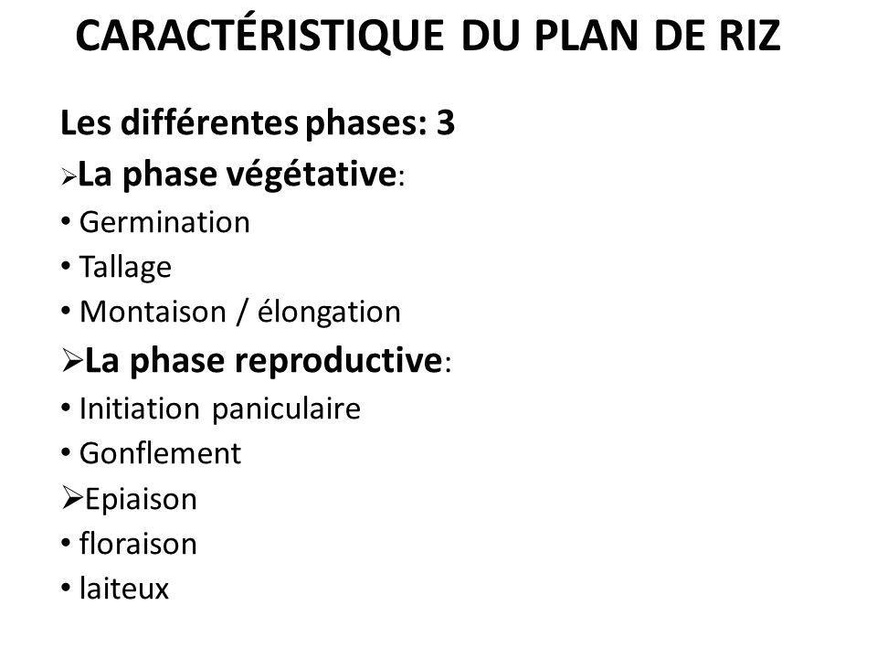 CARACTÉRISTIQUE DU PLAN DE RIZ Les différentes phases: 3 La phase végétative : Germination Tallage Montaison / élongation La phase reproductive : Init