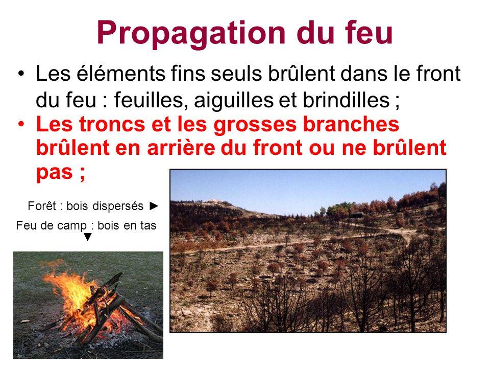 Les éléments fins seuls brûlent dans le front du feu : feuilles, aiguilles et brindilles ;