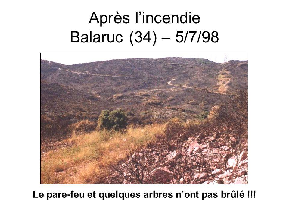 Après lincendie (Var 2003) Boisements rescapés Zones détruites