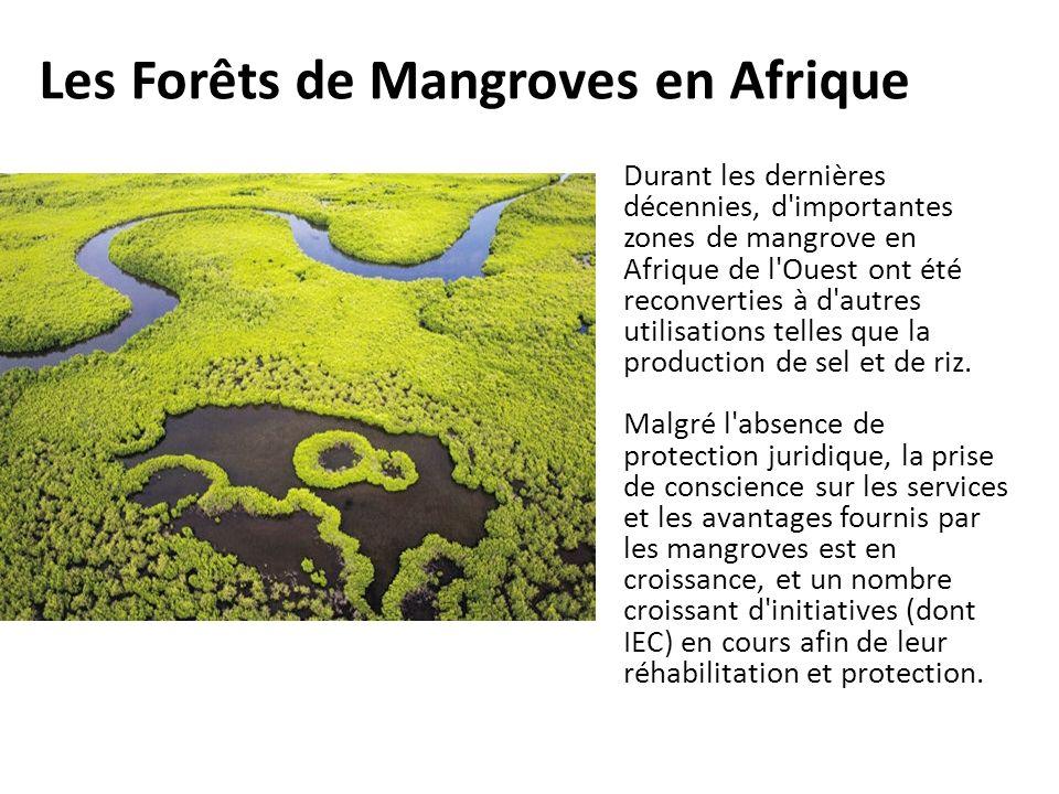 Les Forêts de Mangroves en Afrique Durant les dernières décennies, d'importantes zones de mangrove en Afrique de l'Ouest ont été reconverties à d'autr