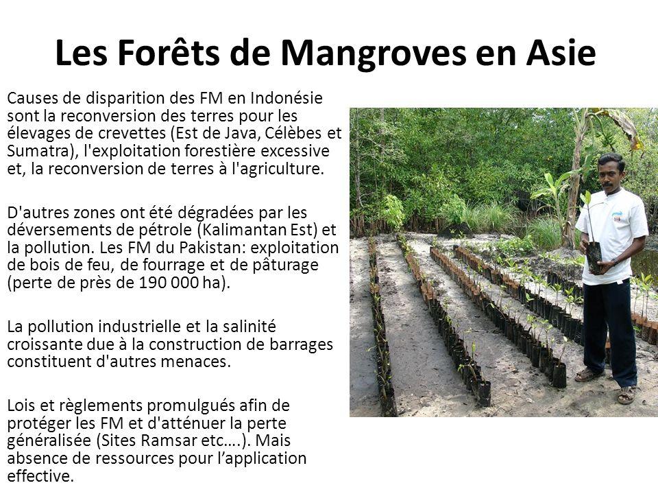 Les Forêts de Mangroves en Asie Causes de disparition des FM en Indonésie sont la reconversion des terres pour les élevages de crevettes (Est de Java,