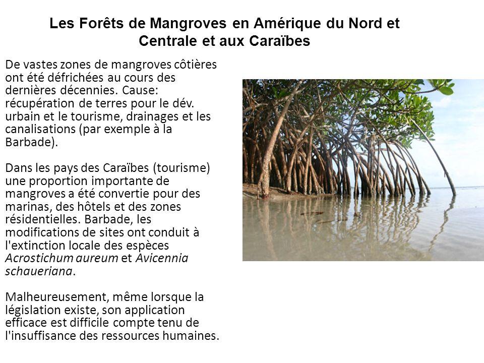 Les Forêts de Mangroves en Amérique du Nord et Centrale et aux Caraïbes De vastes zones de mangroves côtières ont été défrichées au cours des dernière