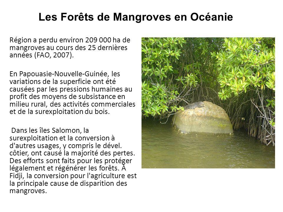 Les Forêts de Mangroves en Océanie Région a perdu environ 209 000 ha de mangroves au cours des 25 dernières années (FAO, 2007). En Papouasie-Nouvelle-