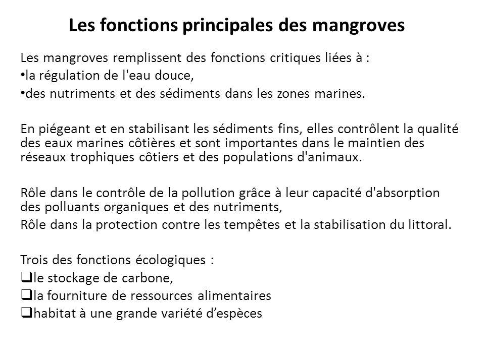 Les fonctions principales des mangroves Les mangroves remplissent des fonctions critiques liées à : la régulation de l'eau douce, des nutriments et de