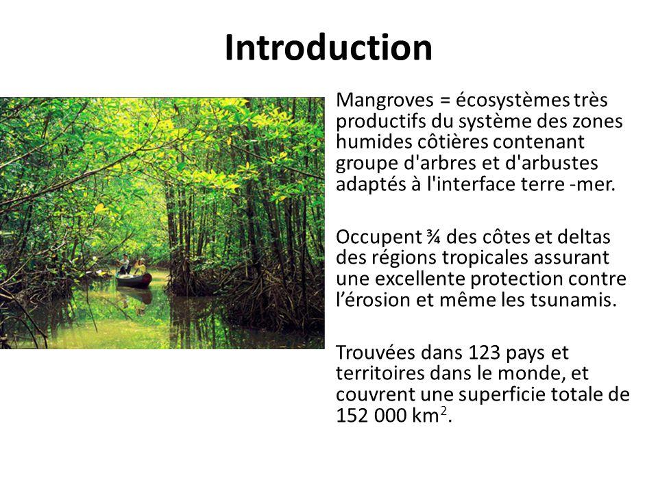 Introduction Mangroves = écosystèmes très productifs du système des zones humides côtières contenant groupe d'arbres et d'arbustes adaptés à l'interfa