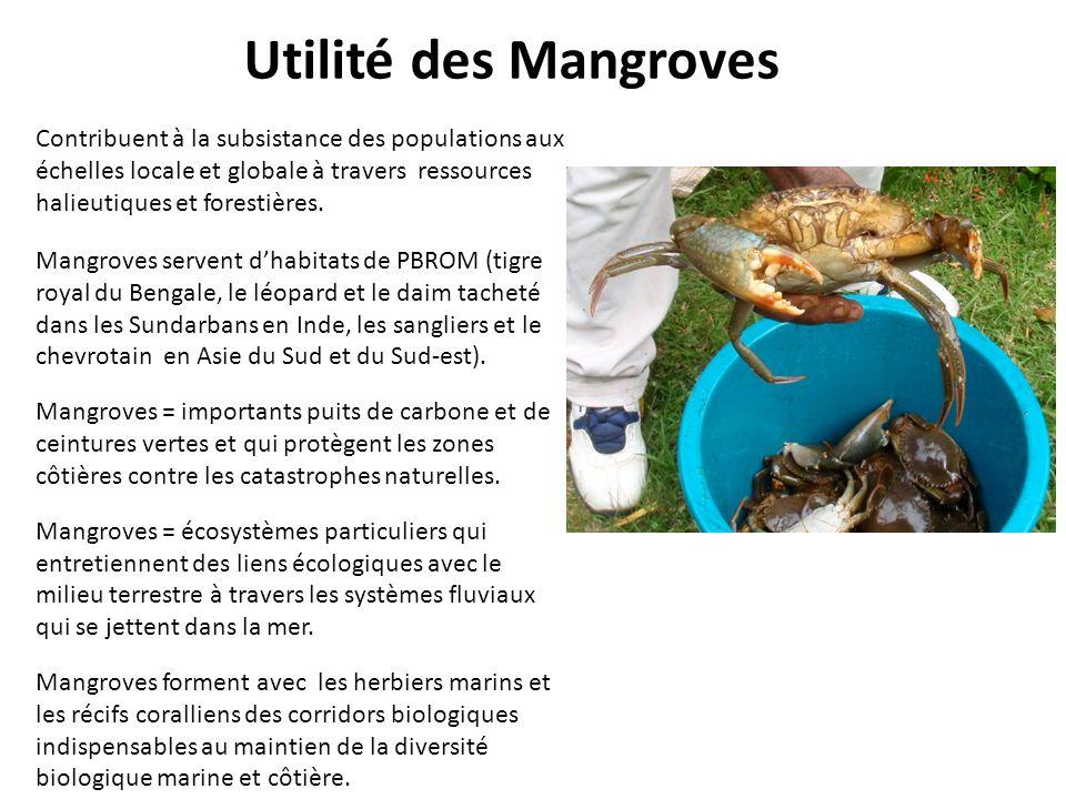 Utilité des Mangroves Contribuent à la subsistance des populations aux échelles locale et globale à travers ressources halieutiques et forestières. Ma