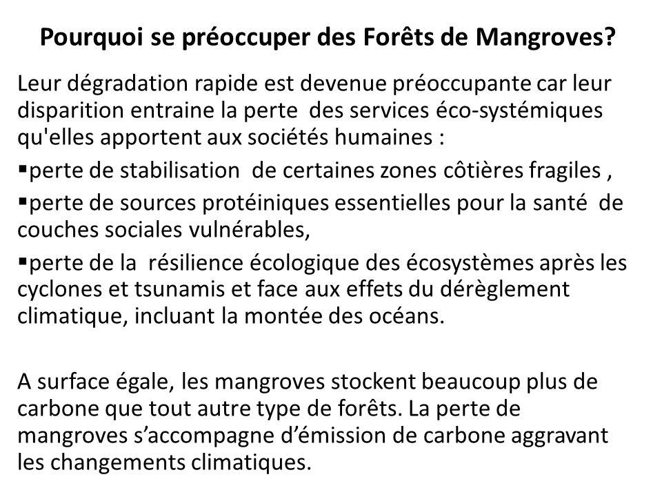 Pourquoi se préoccuper des Forêts de Mangroves? Leur dégradation rapide est devenue préoccupante car leur disparition entraine la perte des services é