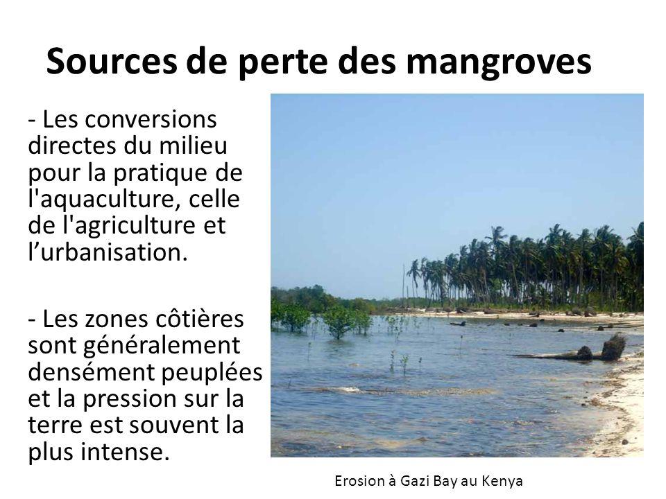 Sources de perte des mangroves - Les conversions directes du milieu pour la pratique de l'aquaculture, celle de l'agriculture et lurbanisation. - Les