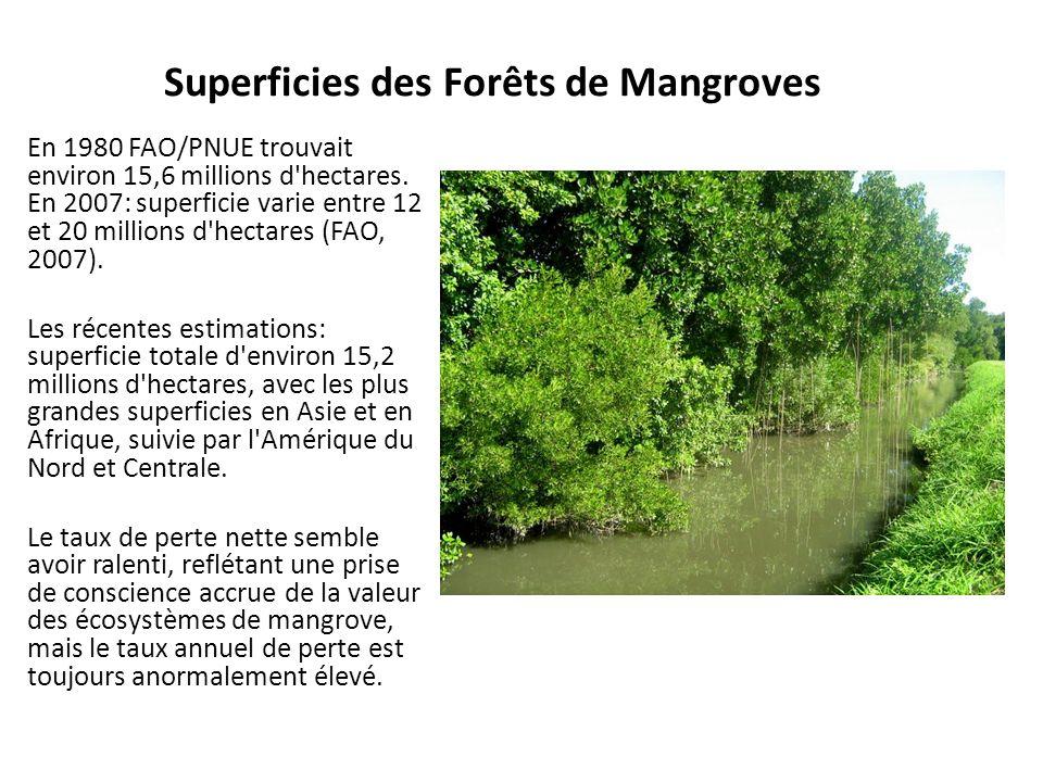 Superficies des Forêts de Mangroves En 1980 FAO/PNUE trouvait environ 15,6 millions d'hectares. En 2007: superficie varie entre 12 et 20 millions d'he