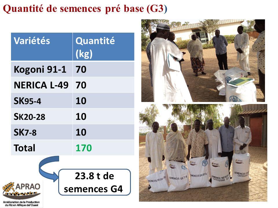 VariétésQuantité (kg) Kogoni 91-170 NERICA L-4970 SK 95-4 10 S K20-28 10 SK 7-8 10 Total170 26 Quantité de semences pré base (G3) 23.8 t de semences G
