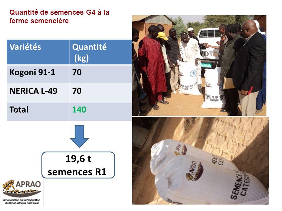 VariétésQuantité (kg) Kogoni 91-170 NERICA L-4970 Total140 27 Quantité de semences G4 à la ferme semencière 19,6 t semences R1 0