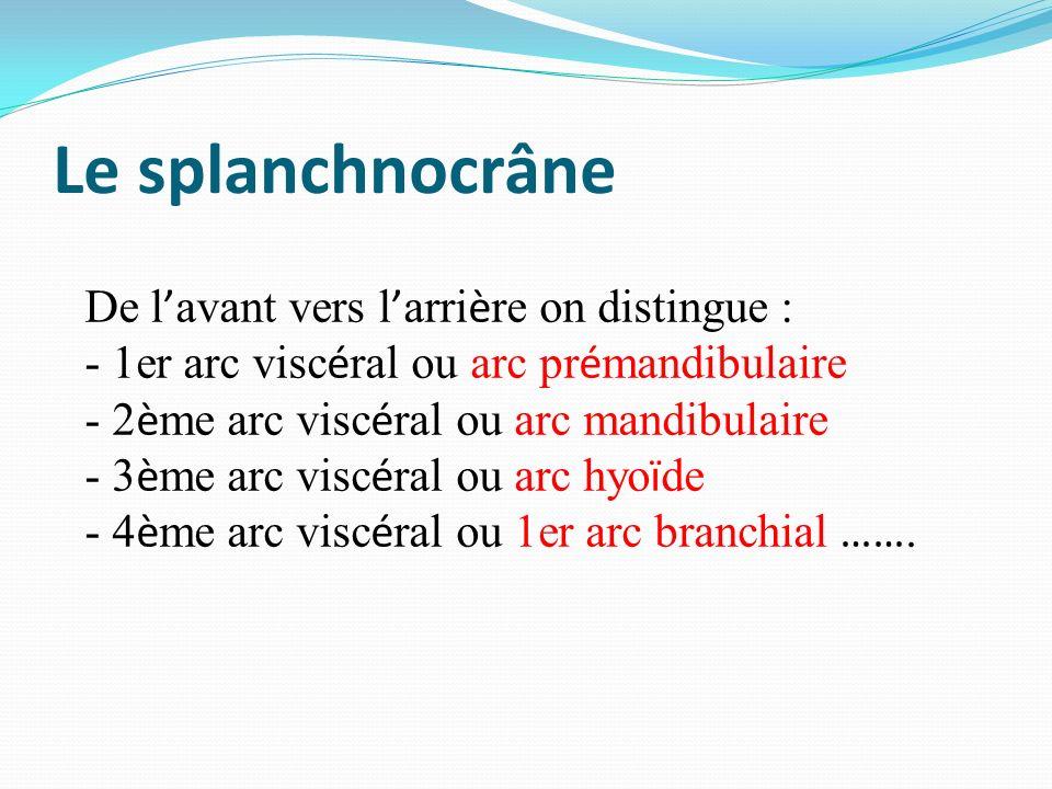 Le splanchnocrâne De l avant vers l arri è re on distingue : - 1er arc visc é ral ou arc pr é mandibulaire - 2 è me arc visc é ral ou arc mandibulaire