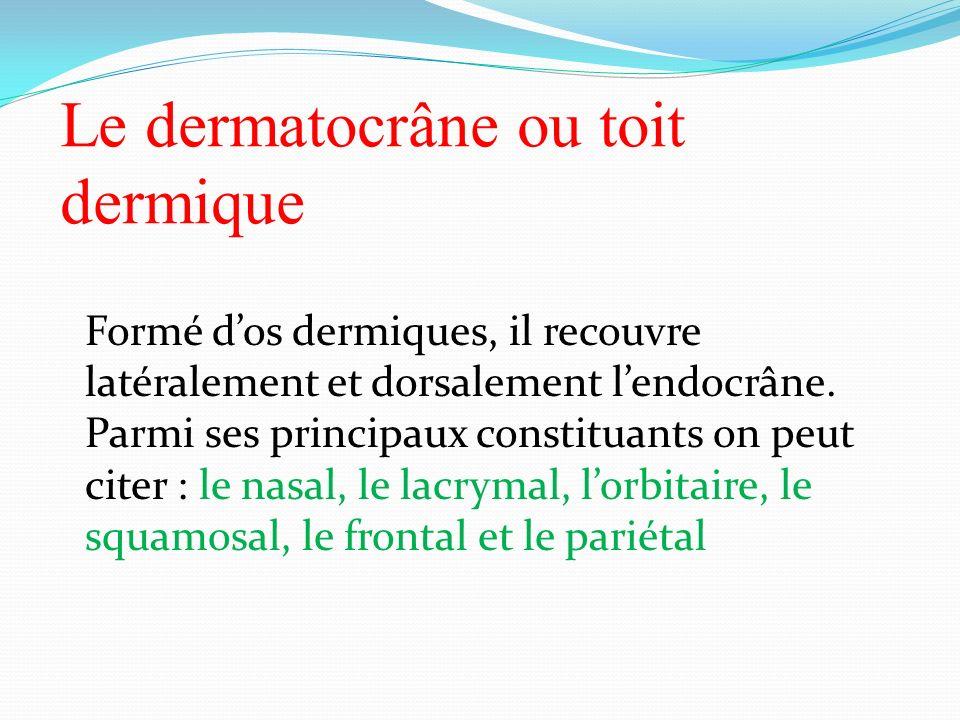 Le dermatocrâne ou toit dermique Formé dos dermiques, il recouvre latéralement et dorsalement lendocrâne. Parmi ses principaux constituants on peut ci