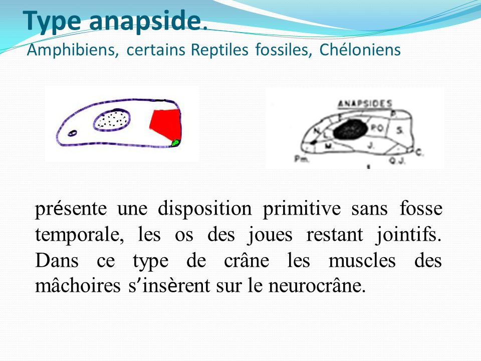 Type anapside.