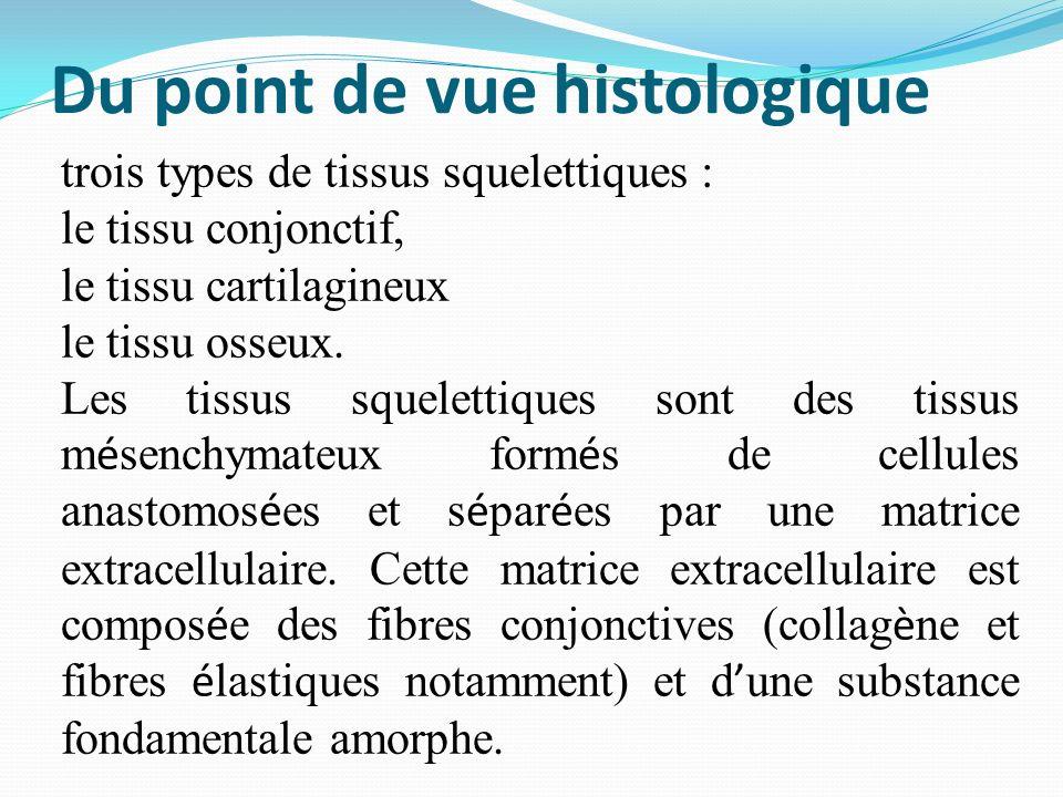 Du point de vue histologique trois types de tissus squelettiques : le tissu conjonctif, le tissu cartilagineux le tissu osseux. Les tissus squelettiqu