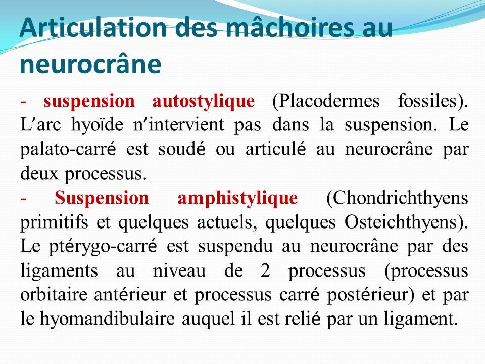 Articulation des mâchoires au neurocrâne - suspension autostylique (Placodermes fossiles). L arc hyo ï de n intervient pas dans la suspension. Le pala