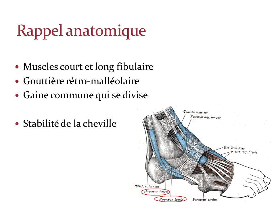 Muscles court et long fibulaire Gouttière rétro-malléolaire Gaine commune qui se divise Stabilité de la cheville