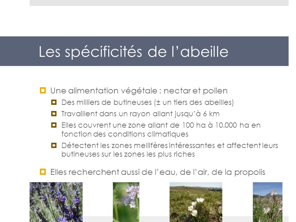 Les spécificités de labeille Une alimentation végétale : nectar et pollen Des milliers de butineuses (± un tiers des abeilles) Travaillent dans un ray