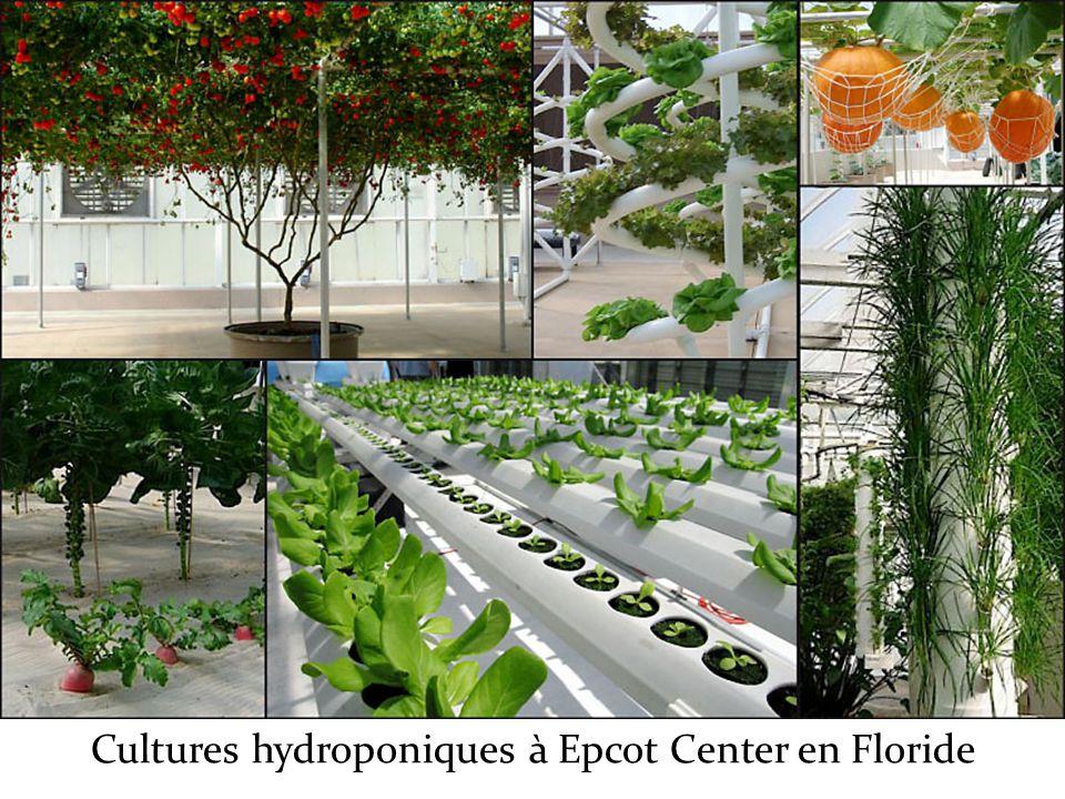 Cultures hydroponiques à Epcot Center en Floride