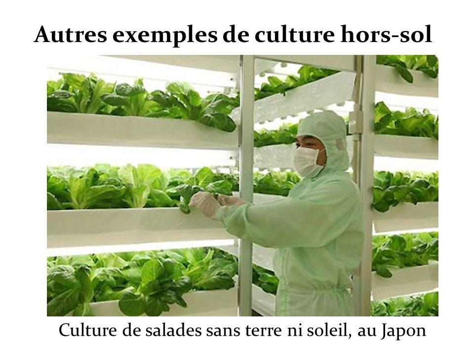 Culture de salades sans terre ni soleil, au Japon Autres exemples de culture hors-sol
